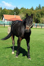 Free Beautiful Horse Stock Photos - 3102213