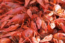 Free Red Boiled Crayfishes Stock Photos - 3100113