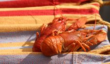 Free Two Large Crayfishes Stock Image - 3100121