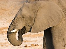 Free Elephant Drinking Royalty Free Stock Photos - 3100738
