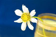 Free White Chamomile, Macro Royalty Free Stock Photo - 3101645