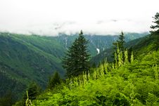 Free Juneau Alaska Valley View Stock Photos - 3102343