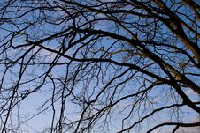 Tree Branches And The Sky Royalty Free Stock Image