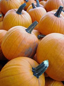 Free Pumpkins For Sale! Royalty Free Stock Images - 3102819