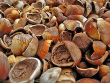 Free Empty Hazelnut Shells Royalty Free Stock Photo - 3103325