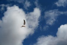 Free Seagull In A Blue Sky Stock Photography - 3103352