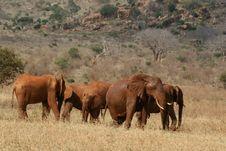 Free Elephant Herd Stock Images - 3103904