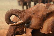Free Elephant Drinking Royalty Free Stock Photography - 3103907
