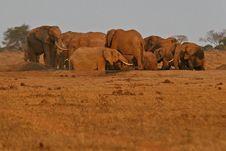 Free Elephants At Waterhole Stock Photo - 3103950