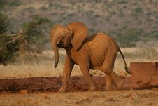 Free Elephant Calf Royalty Free Stock Photo - 3103985