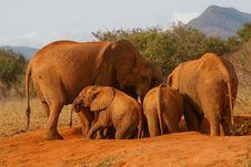 Free Elephant Family Royalty Free Stock Photos - 3104048