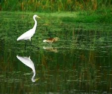 Free Egret Stock Photos - 3104503