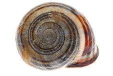 Free Snail Royalty Free Stock Photography - 3104647