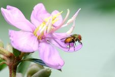 Free Housefly On Flower Stock Image - 3104671