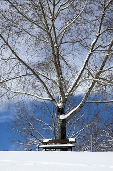 Free Winter Bench Stock Photography - 3105142