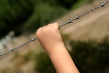 Free Hand In A Barbed Wire Royalty Free Stock Image - 3105686