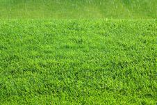 Free Green Grass Field Stock Photography - 3105862