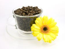 Free Flower And Coffee Royalty Free Stock Image - 3105886