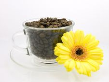 Free Flower And Coffee Royalty Free Stock Photography - 3105897
