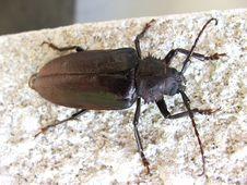 Free The Big Bug On A Wall. Stock Image - 3108571