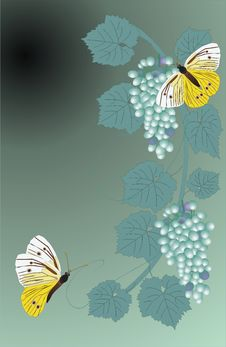 Free Green Grapes And Butterflies Stock Photography - 3108642