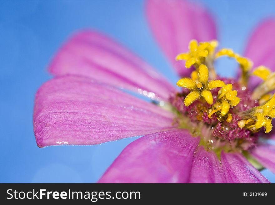 Petals of pink flower