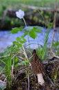 Free Black Morel Mushroom And A Bug Stock Image - 31004231