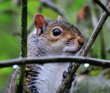 Free Squirrel Up Close. Stock Photo - 31007830