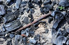 Free Old Rusty Nail In Fire Pit With Coal And Ash Royalty Free Stock Photo - 31013225