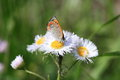 Free Small Copper Royalty Free Stock Image - 31026396