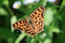 Free The Butterfly Which Extends A Wing Stock Images - 31026474
