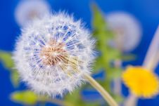 Free Dandelion Macro Closeup Stock Photos - 31029553