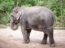 Free Female Elephant Stock Photo - 31030310