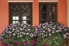 Free Flowers On Windowsill Stock Photography - 31030822