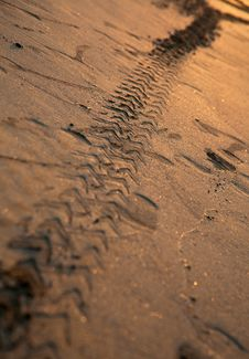 Free Trail Of Car Tire On The Sand Stock Photography - 31035112