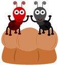 Free Bread Ant Stock Photos - 31058763