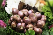 Free Garlic Stock Photo - 31055480