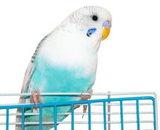 Free Wavy Parrot Royalty Free Stock Images - 31055639