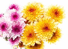 Free Flowers Stock Photos - 31058753