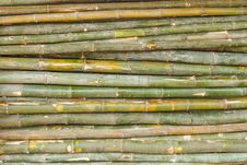 Free The Bamboo. Stock Photography - 31060342