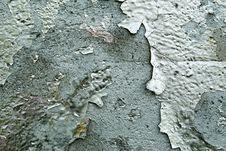 Free Grunge Graffiti Texture Stock Image - 31067331
