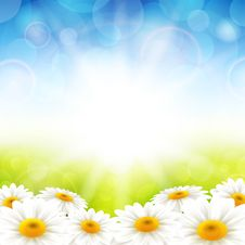 Free Flowers On The Summer Background Stock Photo - 31069010