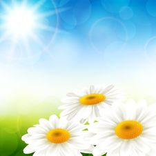 Free Summer Flowers Stock Image - 31069051