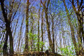 Free Reflection Of The Forests In The Water Of A Forest Lake Stock Photo - 31076980