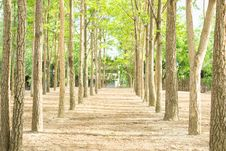 Free Trees Stock Photo - 31072300