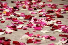 Free Rose Petals Stock Photography - 31074352