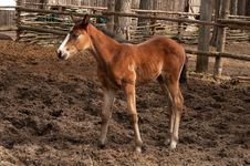 Free Foal Stock Photography - 31075792