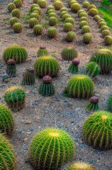 Free Garden Royalty Free Stock Photos - 31076688
