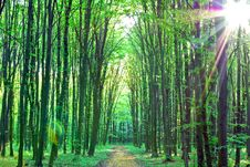 Green Trees Sunny Day In The Forest Stock Photography