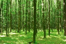 Green Trees Sunny Day In The Forest Royalty Free Stock Photos
